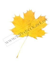 Осень Биллербек